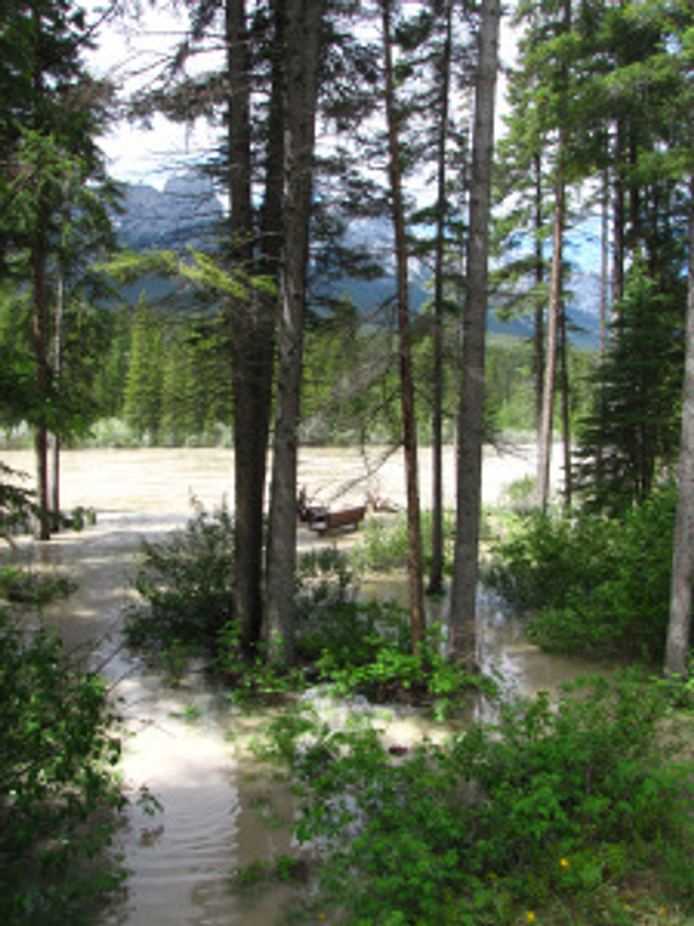 Flood waters of the Bow River help to redistribute sediment and nutrients away from the river bank.