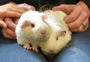 Thank You, Motley Zoo, for Our Newest Family Members: Marshmallow and Jelly Bean!