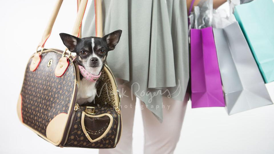 Babes, Booze, Mutts and Pocketbook Bingo Tickets