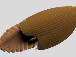 Massive new animal species discovered in half-billion-year-old Burgess Shale
