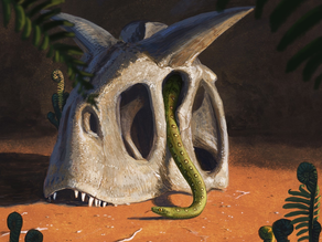 Modern snakes evolved from a few survivors of dino-killing asteroid
