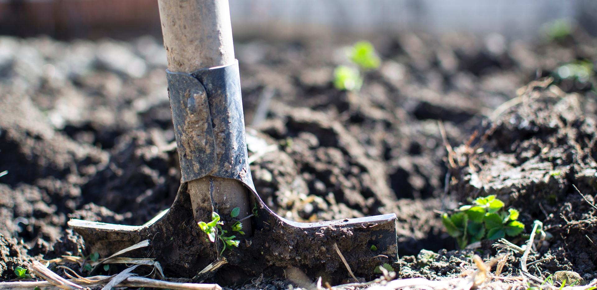 agriculture-backyard-blur-close-up-29623