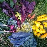 colorful display of fresh vegetables
