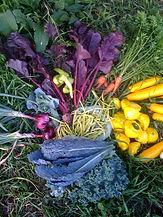 vegetable harvest.jpg