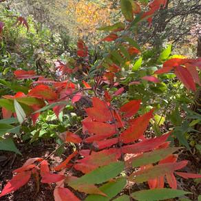 Autumn - Awe Inspiring Health