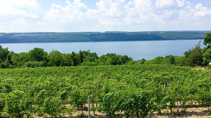Glacier Vineyards in Finger Lakes.jpg