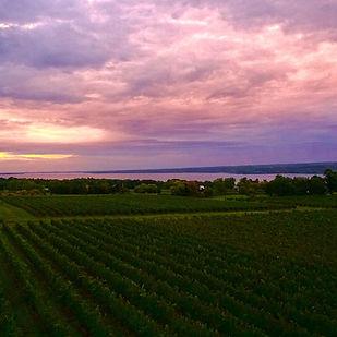 Hosmer Winery Sunset.jpg