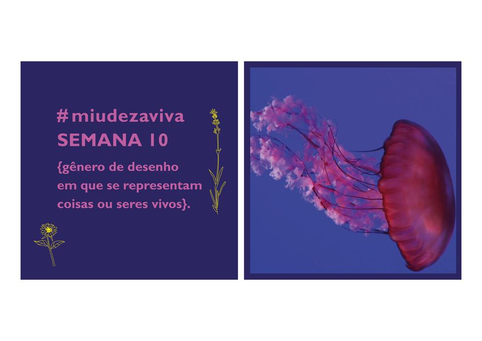 #miudezaviva