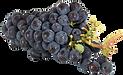 grapes-2281817_640.png