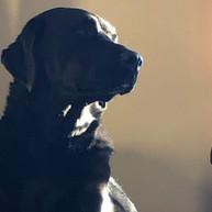 Sam the Dog.jpg