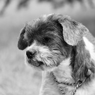 Dog Friends3.jpeg