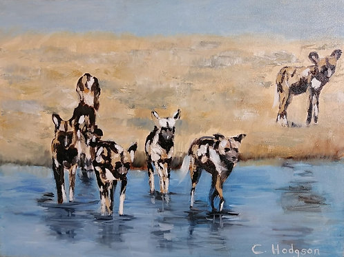 Wild Dogs in Stream