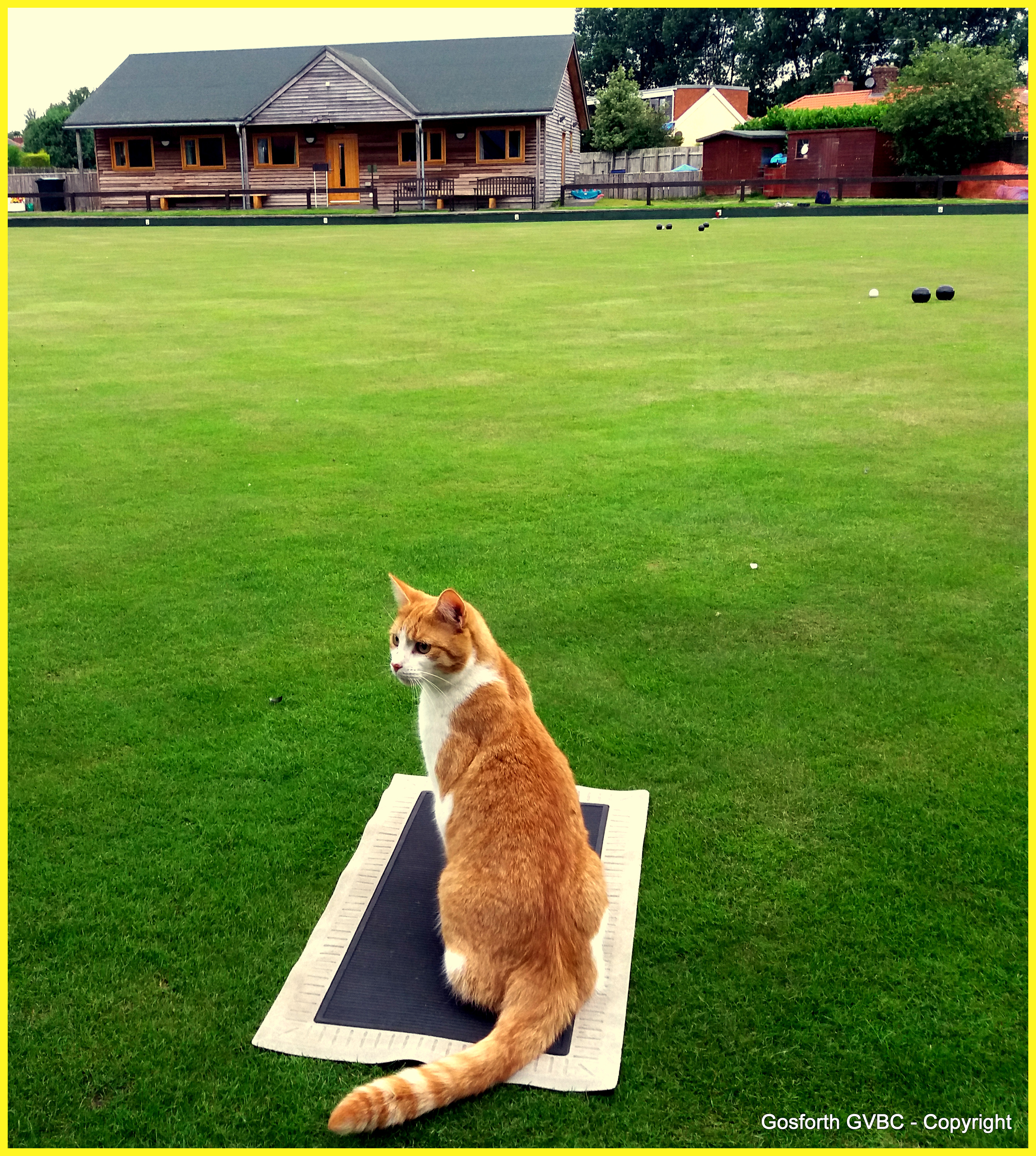 Cool Cats Play Bowls