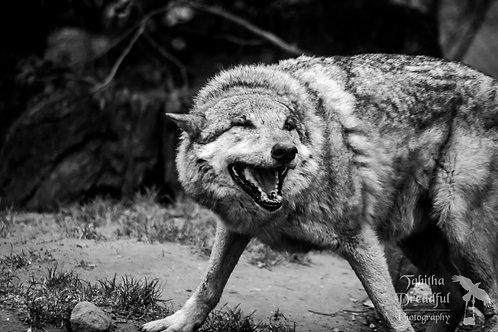 Wolfish Grin