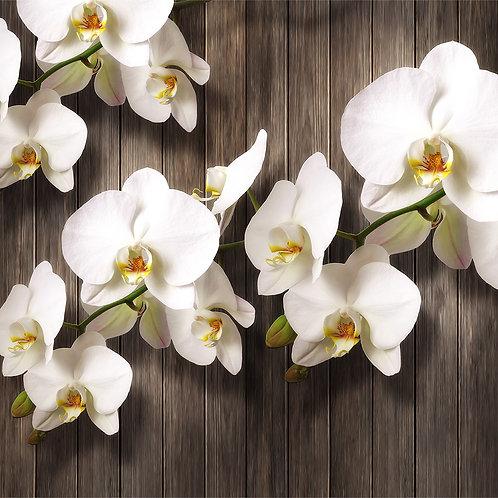 3d фотообои - Орхидеи на дереве