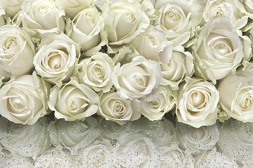 Фотообои с белыми розами