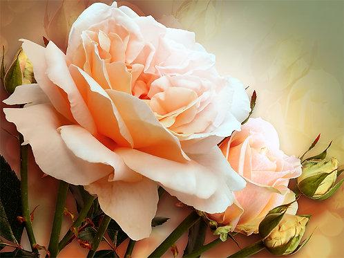 Фотообои на стену с крупной розой