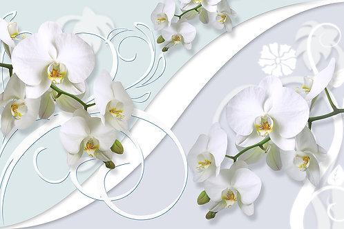 3д фотообои с белыми орхидеями