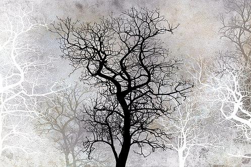 Дизайнерские фотообои - Деревья