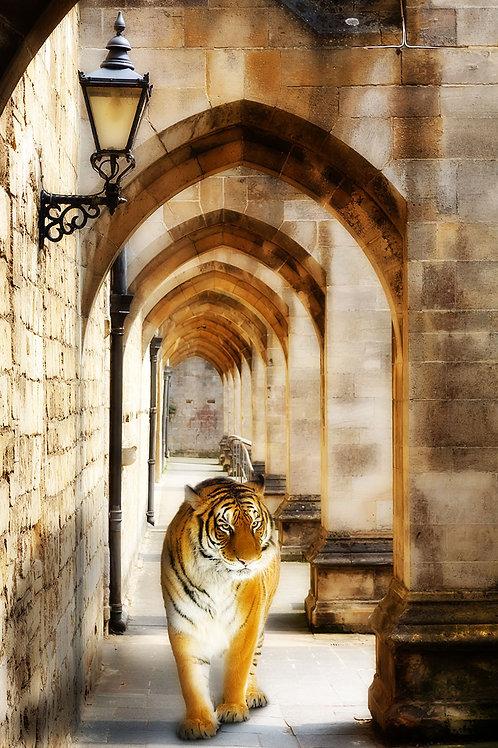 Дизайнерские фотообои - Тигр в арке
