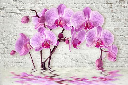 3d фотообои - Орхидеи над водой на кирпичной стене