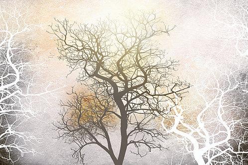 Дизайнерские фотообои - Мистика деревьев