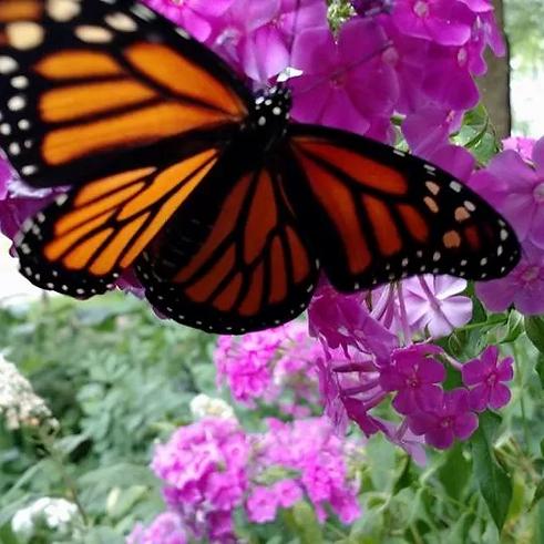 butterfly.webp