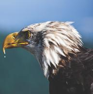 Mirada de águila