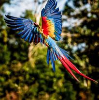 Un ángel de colores