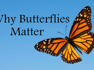CANCELLED: Why Butterflies Matter