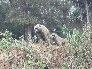 2nd Interesting Animal Sighting