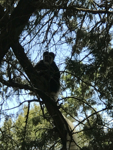 3rd Animal Sighting - Monkeys!