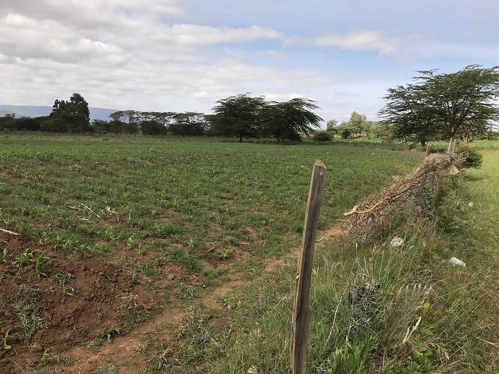 Third field