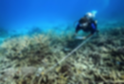 web coral reef photo.png