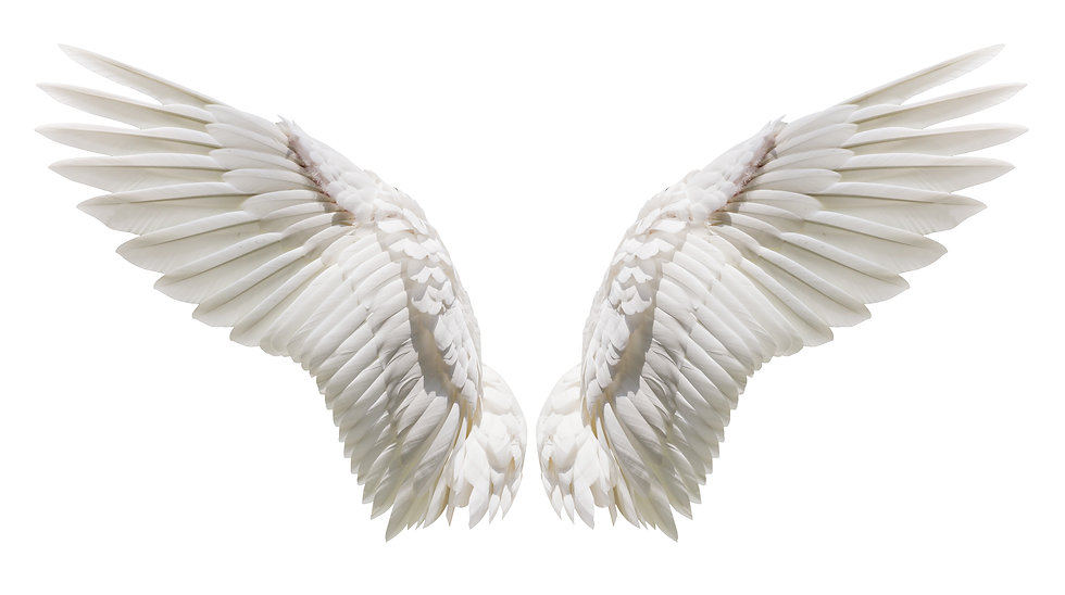 Angel wings isolated on white background with clipping part.jpg