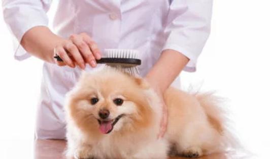 خدمات-تجميل-ورعاية-الحيوان-الأليف-380x22