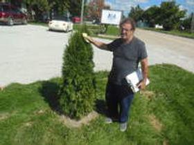 Ira Tree.jpg