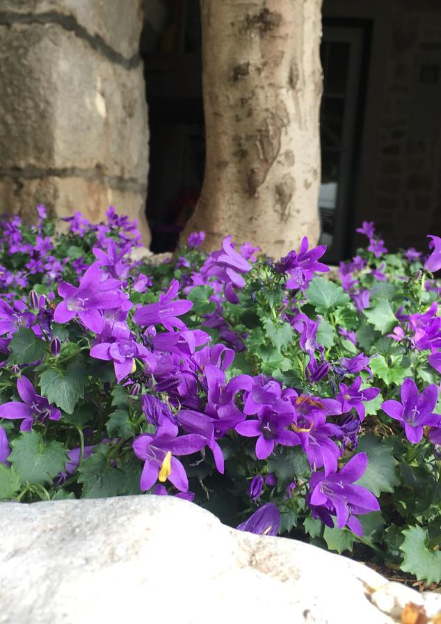SolineHome Brela | Outside a house