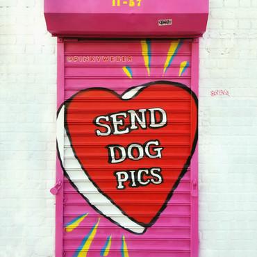 Send Dog Pics Gate