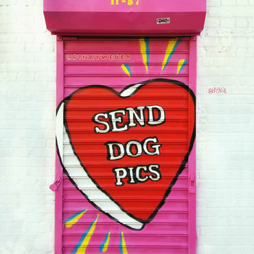 Send Dog Pics Gate