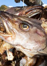 Fisk nærbilde.JPG