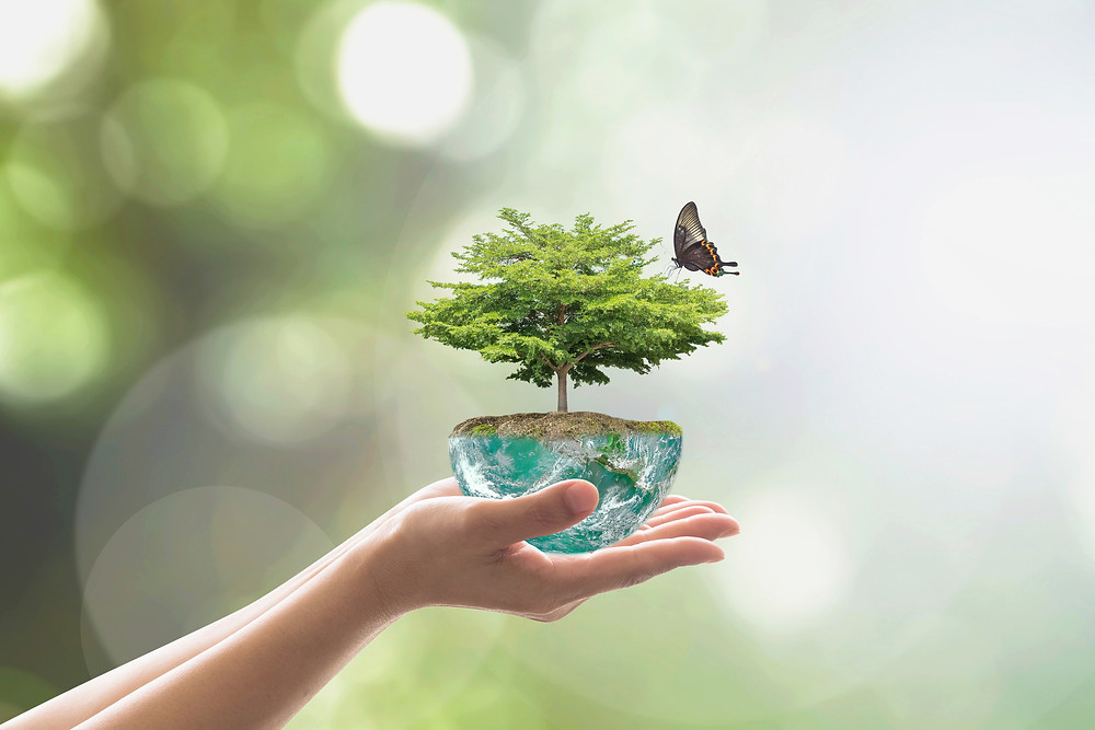 hands holding an Earth with a tree and a butterfly