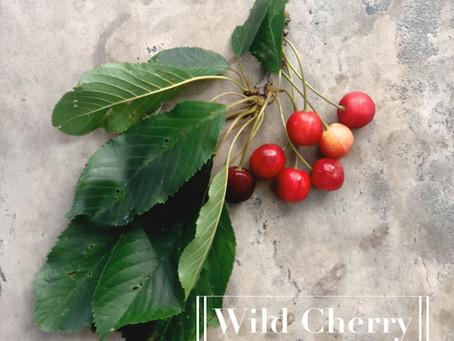 Summer Foraging: Wild Cherry
