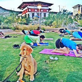 Child pose with puppy #yogaonatuesday #daretodreamyoga #freeyoga #supportlocal #elpasoyoga