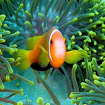 Best-Snorkeling-Fihalhohi-Island-Housere