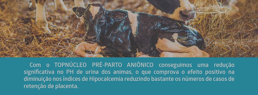 PR%C3%89-PARTO_edited.jpg
