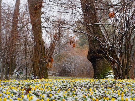 Cele mai bune locuri de fotografiat primavara in Bucuresti