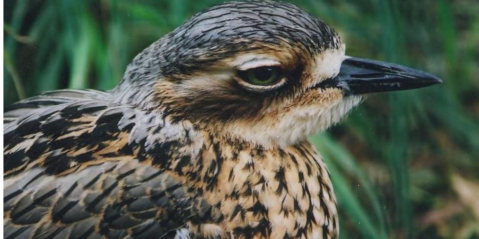 Go Birdwatching at Warril Parklands