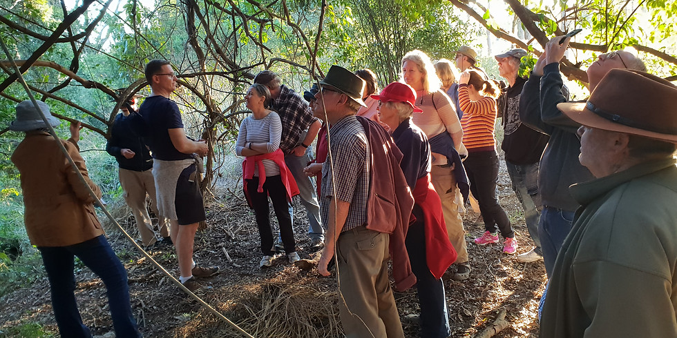 Guided Walk at Cliveden Avenue Reserve