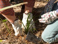 Rakali Festival Planting.jpg